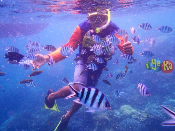 Snorkling with fish